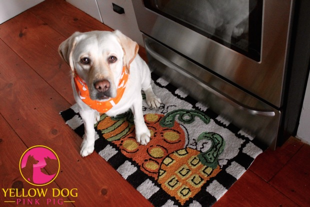 New floor mat in a room - quick and easy way to fall-aify a room. Plus a cute dog with a bandanna never hurts